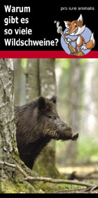 flyer_wildschweinpopulation.jpg